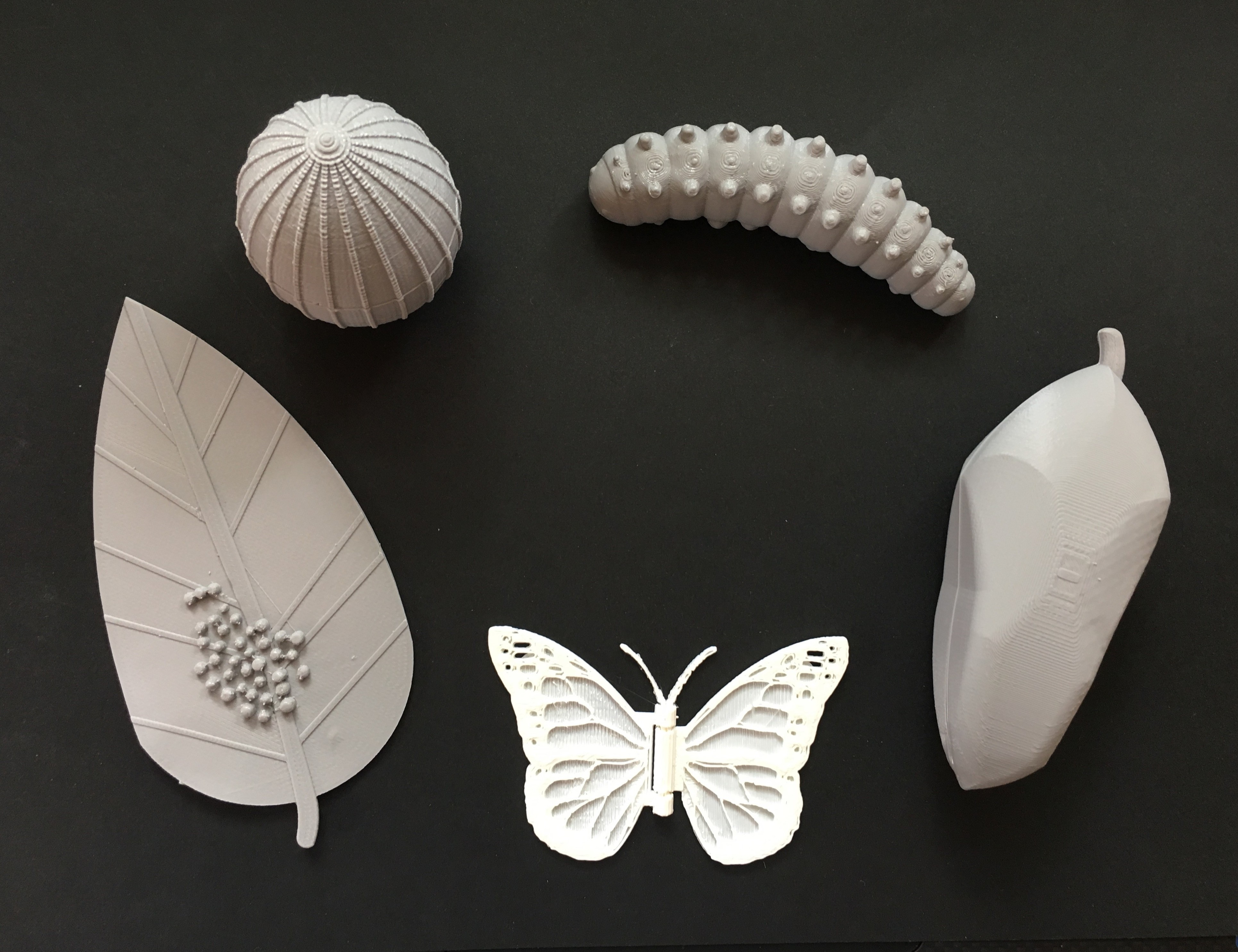 Stages of Butterfly lifecycle 3D Print